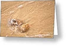 Seashell Turbulence Greeting Card by Kaye Menner