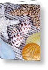 Seashells And Starfish Greeting Card by Bill Brennan - Printscapes