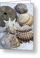 Seashells Greeting Card by Frank Tschakert