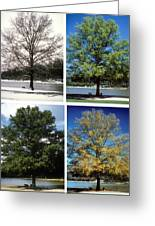 Seasons Of Time Greeting Card by Gerard Fritz