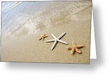 Seastars On Beach Greeting Card by Mary Van de Ven - Printscapes