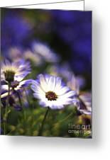 Senetti Dreams Greeting Card by Dorothy Lee
