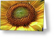 Sensational Sunflower Greeting Card by Christine Belt