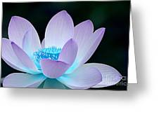 Serene Greeting Card by Photodream Art