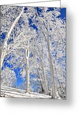 Serious Rime Frost Greeting Card by Alan Lenk