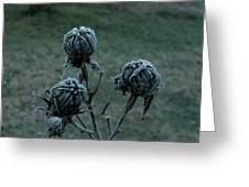 Shadowy Frozen Pods From The Darkside Greeting Card by Douglas Barnett