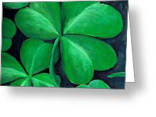 Shamrocks Greeting Card by Nancy Mueller