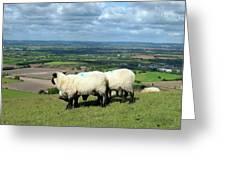 Sheep At Westbury Tor Greeting Card by Kurt Van Wagner