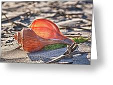 Shell In The Sun Greeting Card by Mike Covington