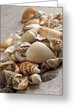 Shellfish Shells Greeting Card by Bernard Jaubert
