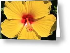 Shine Greeting Card by Kristina Randal
