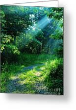 Shining Light Greeting Card by Thomas R Fletcher