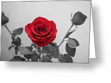 Shining Red Rose Greeting Card by Georgeta  Blanaru