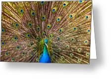 Showing Your Colors Greeting Card by Mike  Dawson