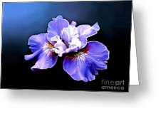 Siberian Iris Greeting Card by Robert Foster