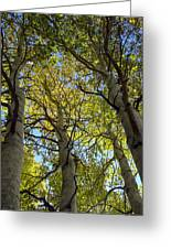 Sierra Nevada Aspen Fall Color Greeting Card by Scott McGuire