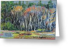 Signs Of Spring Greeting Card by Donald Maier