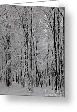 Silence Of Winter Greeting Card by Gabriela Insuratelu