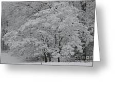 Silent White Greeting Card by Christopher Ewing