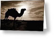 Silhouetted Camel, Sahara Desert, Douz Greeting Card by David DuChemin