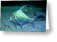 Silver Fish Greeting Card by Svetlana Sewell