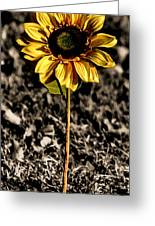 Simplicity Greeting Card by Karen M Scovill