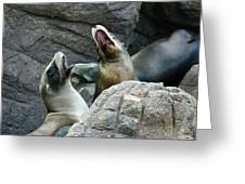 Singing Sea Lions Greeting Card by Anthony Jones
