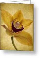 Singular Sensation Greeting Card by Rebecca Cozart