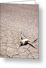Skull In Desert Greeting Card by Kelley King