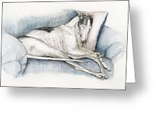 Sleeping Greyhound Greeting Card by Charlotte Yealey
