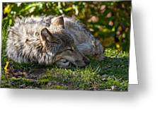 Sleeping Timber Wolf Greeting Card by Michael Cummings