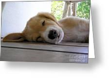 Sleepy Jojo Greeting Card by Barbara Marcus
