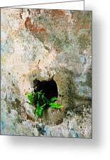 Small Ferns Greeting Card by Perry Webster