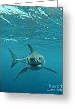 Smiley Shark Greeting Card by Crystal Beckmann