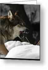 Snarling Wolf Greeting Card by Ernie Echols
