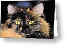 Snickers Greeting Card by Cheryl Poland