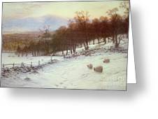 Snow Covered Fields With Sheep Greeting Card by Joseph Farquharson