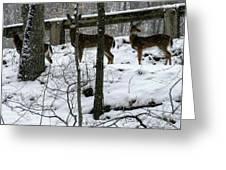 Snow Deer - Rock Creek Park Washington Dc Greeting Card by Fareeha Khawaja
