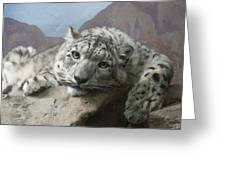 Snow Leopard Relaxing Greeting Card by Ernie Echols