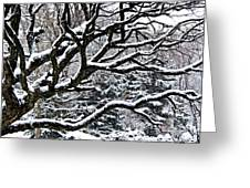 Snowfall And Tree Greeting Card by Elena Elisseeva