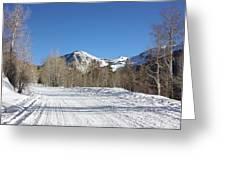 Snowy Aspen Greeting Card by Kim Hojnacki