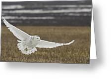 Snowy Owl In Flight Greeting Card by Michaela Sagatova