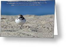 Snowy Plover Message Print Greeting Card by TB Sojka