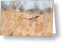 Soaring Hawk Over Field Greeting Card by Douglas Barnett