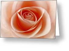 Soft Rose Greeting Card by Steve Williams