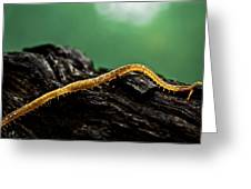 Soil Centipede Greeting Card by Ryan Kelly