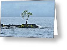 Solitude In Hilo Bay Greeting Card by Christopher Holmes