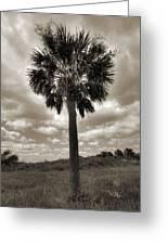 South Carolina Palmetto Palm Tree Greeting Card by Dustin K Ryan