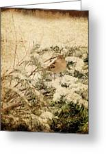 Sparrow In Winter I - Textured Greeting Card by Angie Tirado
