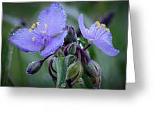 Spiderwort Greeting Card by James Barber